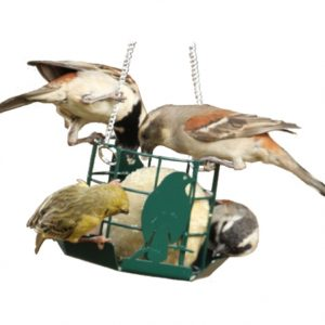 Suet Ball Feeder (Metal)