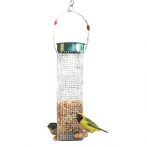Peanut feeder with Peanuts